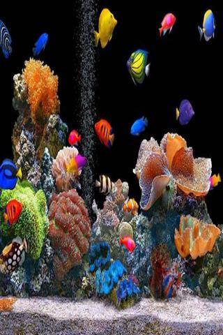 海底世界壁紙免費下載-手機海底世界壁紙安卓版下載