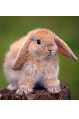 一款精美的可爱的兔子主题壁纸软件,通过个性化的动态设置,使您的手机