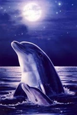 3d海豚壁纸(高清版)